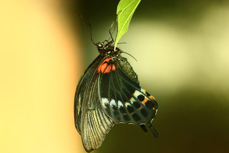 butterfly-2080889_960_720